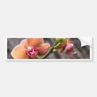 Adesivo Para Carro Orquídea alaranjada