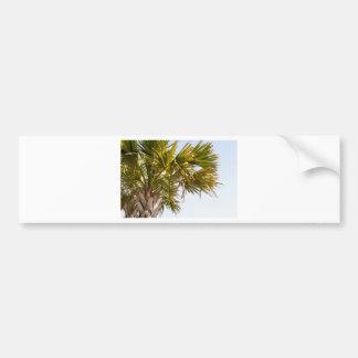 Adesivo Para Carro Palmeira da costa leste Myrtle Beach famoso