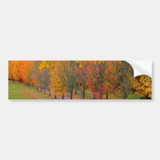 Adesivo Para Carro Parque com as árvores de bordo alinhadas árvore no