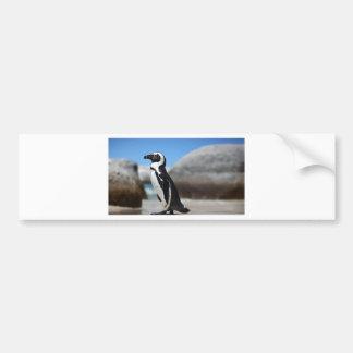 Adesivo Para Carro Pinguim africano