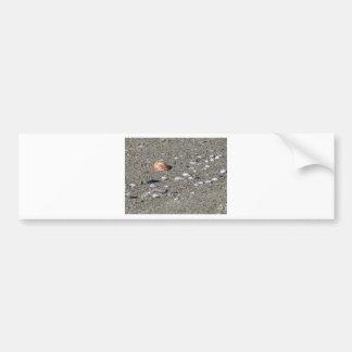 Adesivo Para Carro Seashells na areia. Fundo da praia do verão