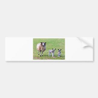 Adesivo Para Carro Sira de mãe a carneiros com os dois cordeiros