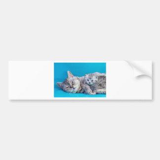 Adesivo Para Carro Sira de mãe ao gato que encontra-se com o gatinho