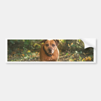 Adesivo Para Carro Staffordshire bull terrier