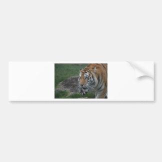 Adesivo Para Carro Tigre