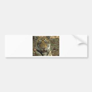 Adesivo Para Carro Tigre bonito e sorrindo