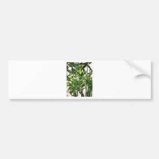 Adesivo Para Carro Tiros de bambu e folhas verdes