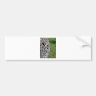 Adesivo Para Carro Tronco de árvore da pera contra o fundo verde