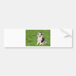 Adesivo Para Carro Um cão novo do sheltie que senta-se na grama