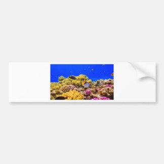 Adesivo Para Carro Um recife de corais no Mar Vermelho perto de