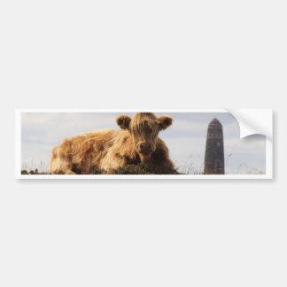 Adesivo Para Carro Vaca de Luing na ilha de Islay, Scotland