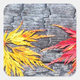 Adesivo Quadrado A folha de bordo amarela e vermelha no preto