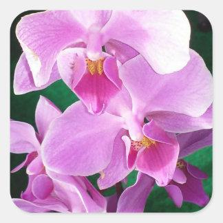 Adesivo Quadrado A orquídea floresce close up no rosa
