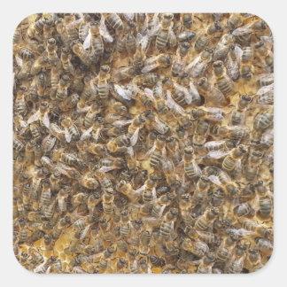 Adesivo Quadrado abelhas do mel e mais abelhas do mel