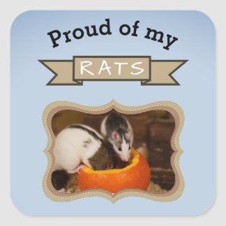 Adesivo Quadrado Adicione seu rato da foto dos ratos do animal de