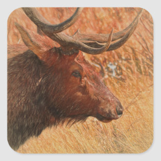 Adesivo Quadrado Alces de Bull