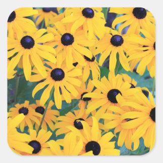 Adesivo Quadrado Amarelo das flores de Susan de olhos pretos dentro