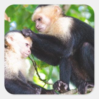 Adesivo Quadrado Amor do macaco