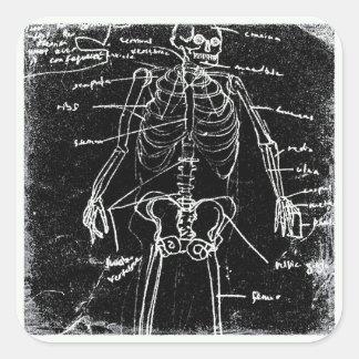 Adesivo Quadrado anatomia de esqueleto humana de tokyo do yaie