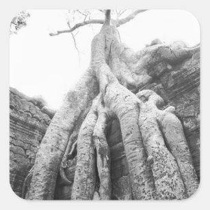 Adesivo Quadrado Angkor Cambodia, árvore Ta Prohm