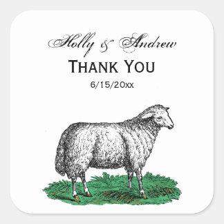 Adesivo Quadrado Animais de fazenda da ovelha dos carneiros do
