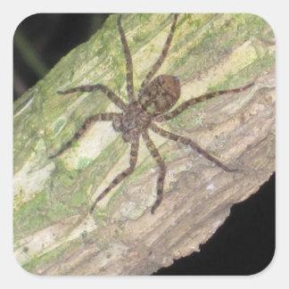 Adesivo Quadrado Aranhas, besouros e insetos exóticos selvagens