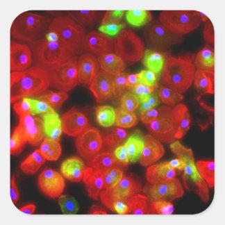 Adesivo Quadrado Arte da ciência das pilhas do macrófago