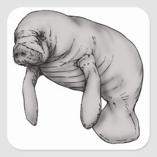 Adesivo Quadrado arte do peixe-boi