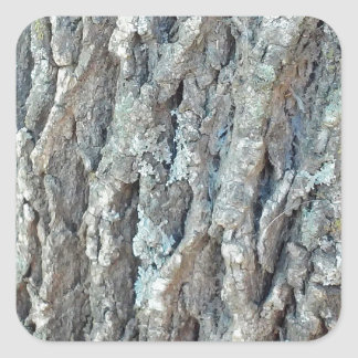 Adesivo Quadrado Árvore de cinza de Texas