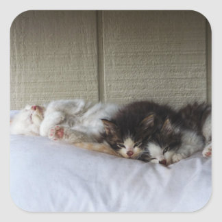 Adesivo Quadrado Belas Adormecidas