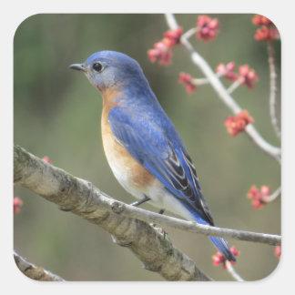 Adesivo Quadrado Bluebird