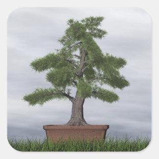 Adesivo Quadrado Bonsais da árvore do zimbro do templo - 3D rendem