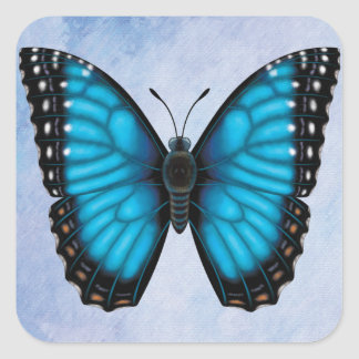 Adesivo Quadrado Borboleta azul de Morpho