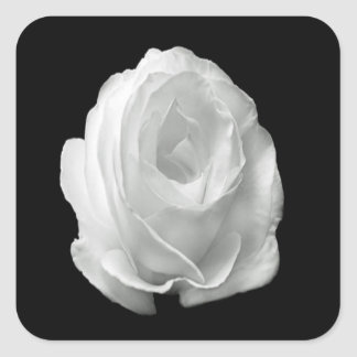 Adesivo Quadrado branco-rosa-em--preto-fundo