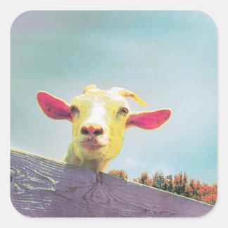 Adesivo Quadrado cabra Cor-de-rosa-orelhuda