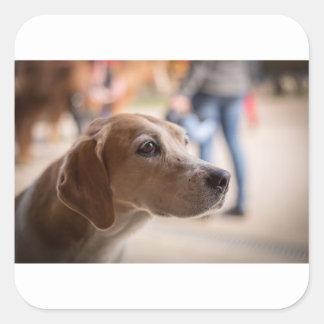 Adesivo Quadrado cão
