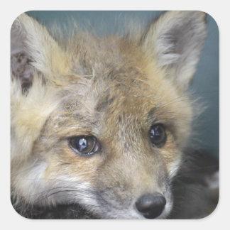Adesivo Quadrado Capa de telefone do Fox