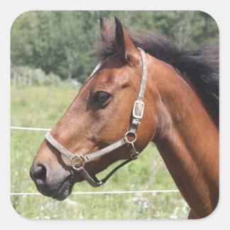 Adesivo Quadrado Cavalo