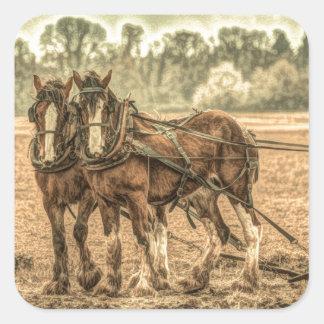 Adesivo Quadrado Cavalos de fazenda primitivos do país ocidental