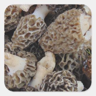 Adesivo Quadrado Cogumelos do Morel