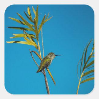 Adesivo Quadrado Colibri fêmea da rubi-garganta na árvore