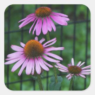 Adesivo Quadrado Coneflower roxo floral