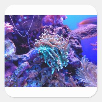 Adesivo Quadrado coral-1053837