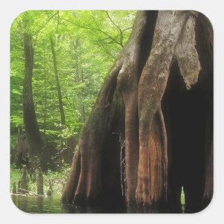 Adesivo Quadrado Cypress oco maciço