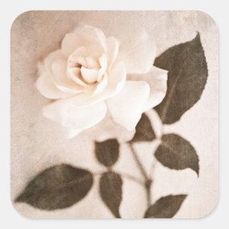 Adesivo Quadrado Da haste cor-de-rosa da flor do Sepia do vintage