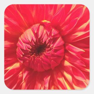 Adesivo Quadrado Dália cor-de-rosa