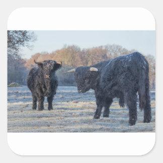 Adesivo Quadrado Dois escoceses escoceses pretos no prado congelado