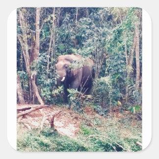 Adesivo Quadrado Elefante em Tailândia