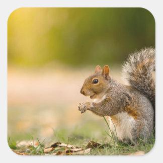 Adesivo Quadrado Esquilo com fome