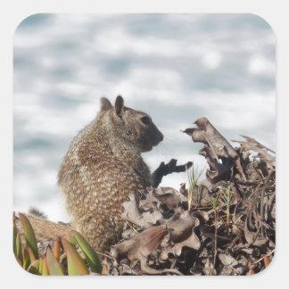 Adesivo Quadrado Esquilo pequeno